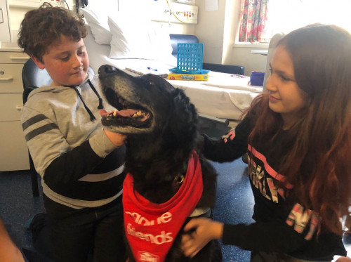 Therapy dog Jack
